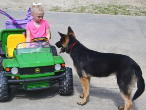 Isabella loves driving her gator around because Maximus follows her everywhere
